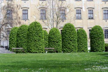 Mužská část zahrady